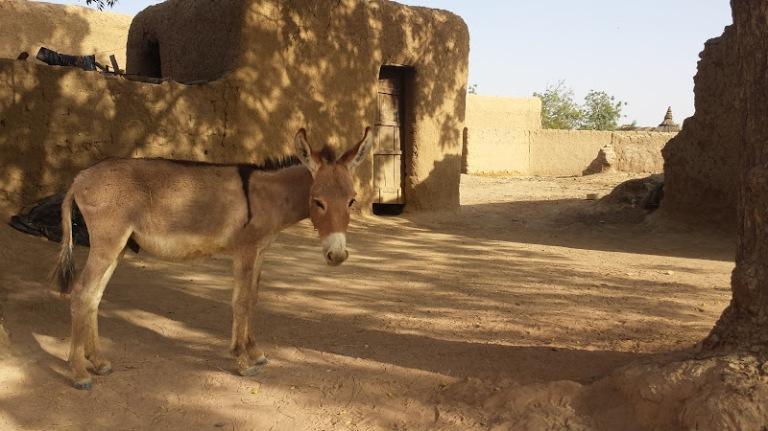An Eeyore in Mali