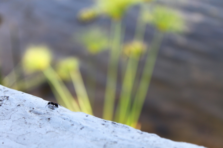 The ant and the Kafue River