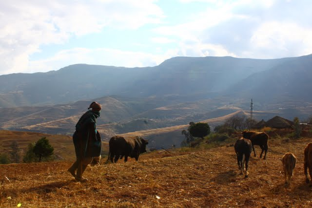 Herder in the mountains - click on the photo for more