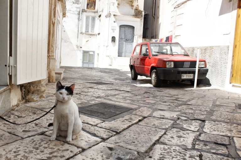 Cat & Fiat - what else? - click on the photo for more