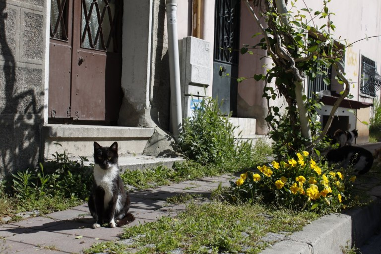 Cat in Istanbul - click on the photo for more